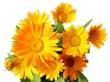 Sušené bylinky- Nechtík lekársky 50g