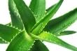 Vôňe do kozmetiky a sviečky 10ml-Aloe vera