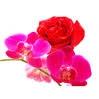 Vôňe do kozmetiky a sviečky10ml-Jazmín,ruža,orchid