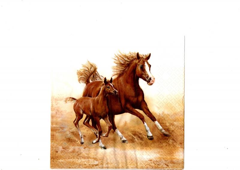 Dva koníky